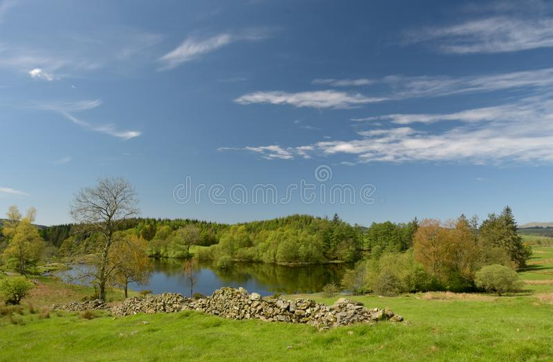 Moss Eccles Tarn on Claife Heights, Lake District. Moss Eccles Tarn surrounded by conifers on Claife Heights in the English Lake District royalty free stock image