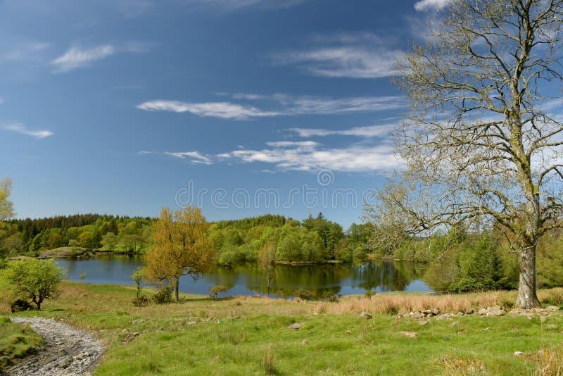 Moss Eccles Tarn op Claife-Hoogten, Meerdistrict stock afbeelding