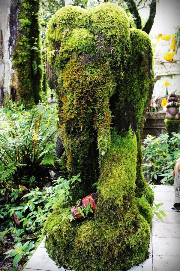 A moss elephant royalty free stock photo