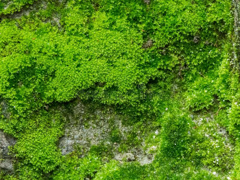 Moss en las paredes foto de archivo