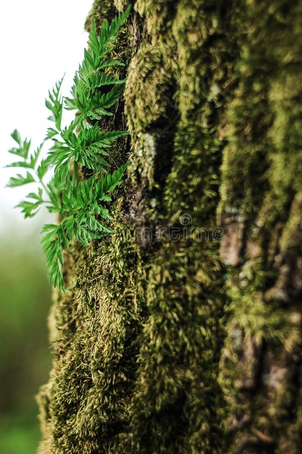Moss and fern stock photography