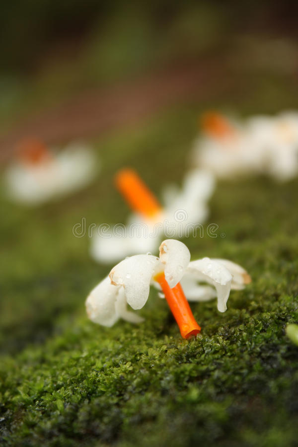 Download Moss Flower Stock Photo - Image: 26589680
