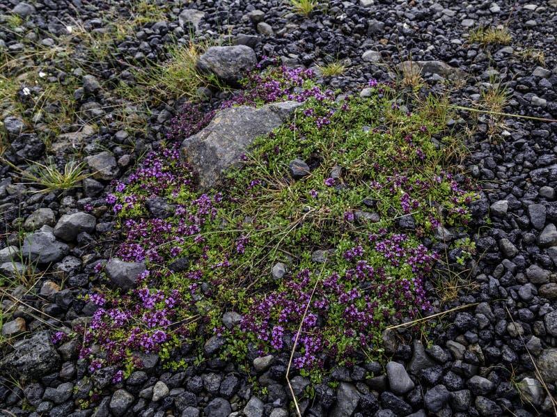 Moss Flowers photographie stock libre de droits