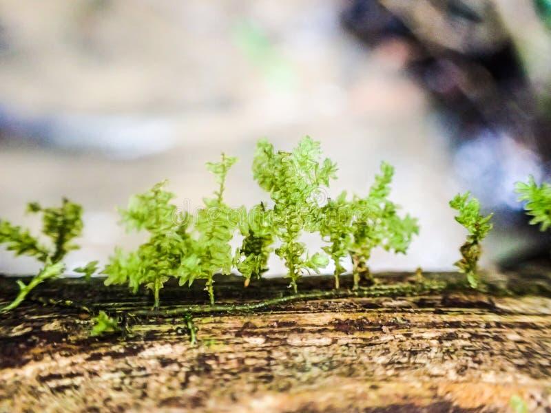 Moss Forest royaltyfri foto