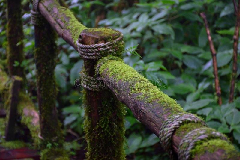 Moss in forest,Doi Intanon, chiangmai,thailand royalty free stock photo