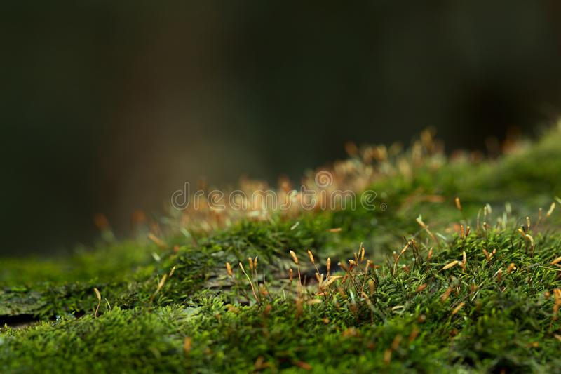 Moss in forest royalty free stock photography