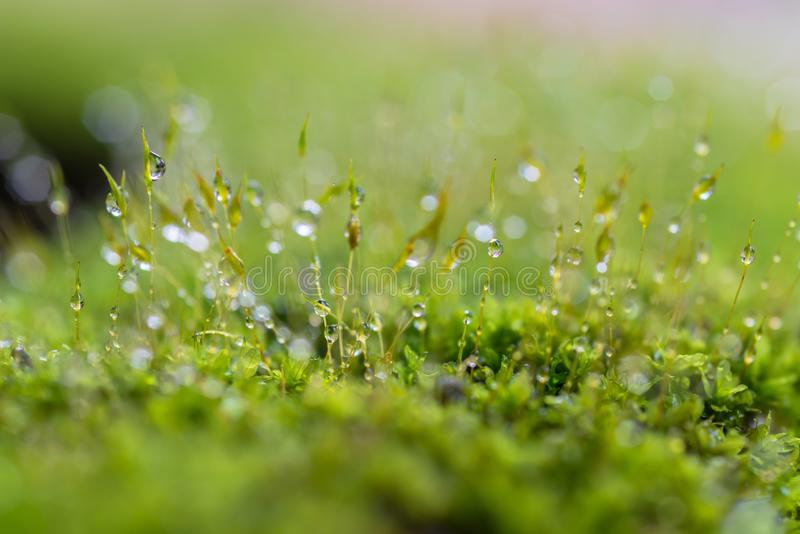 Moss in forest after rain stock photos