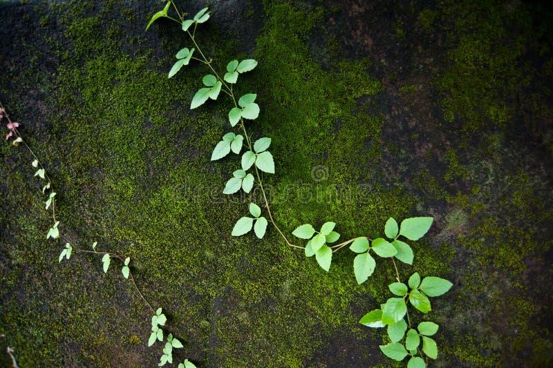 Moss In The Forest verde hermoso fotografía de archivo libre de regalías