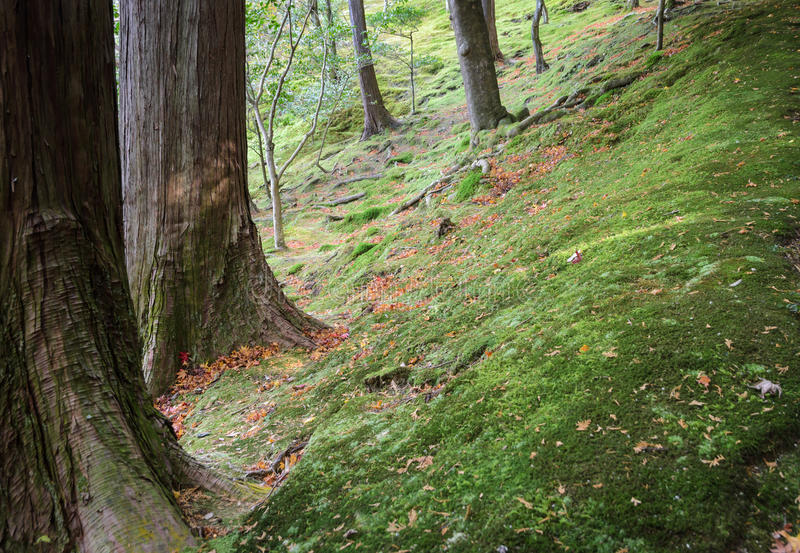 Moss garden background royalty free stock photography