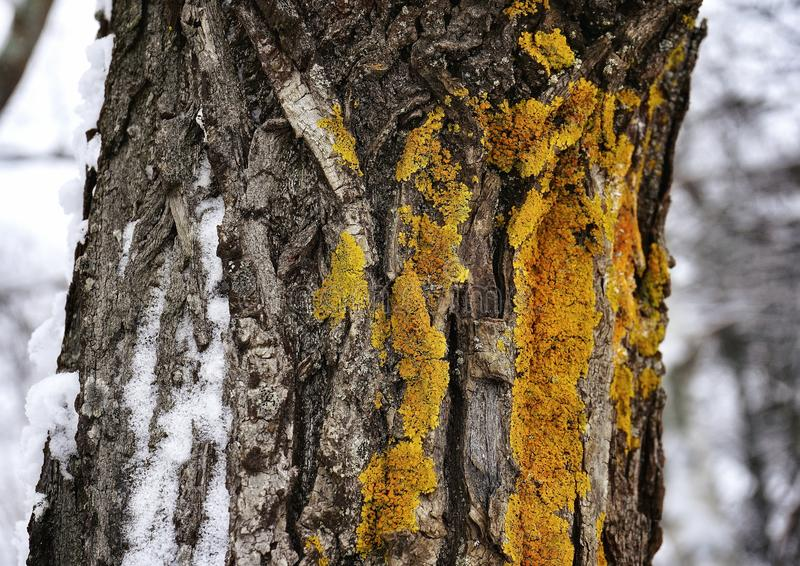 moss ginger color tree trunk close-up forest winter stock photo