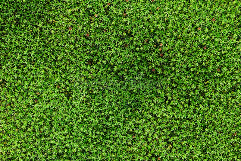 Moss green background stock photos
