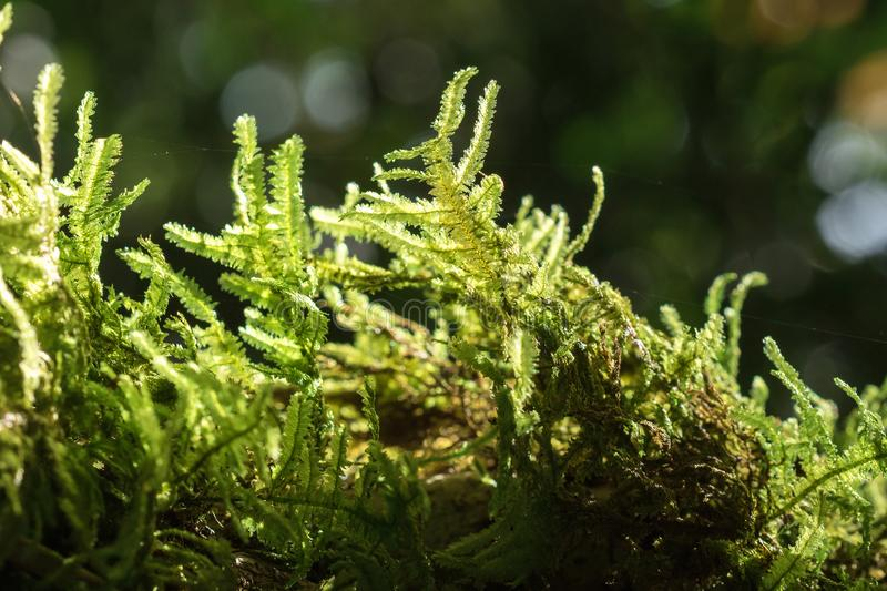 Moss Green on the branches stock photography