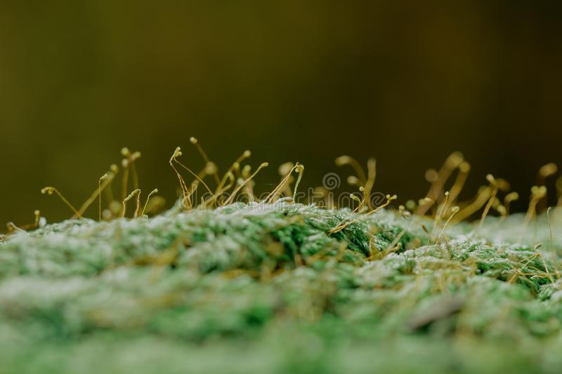 Moss Green on the branches royalty free stock images