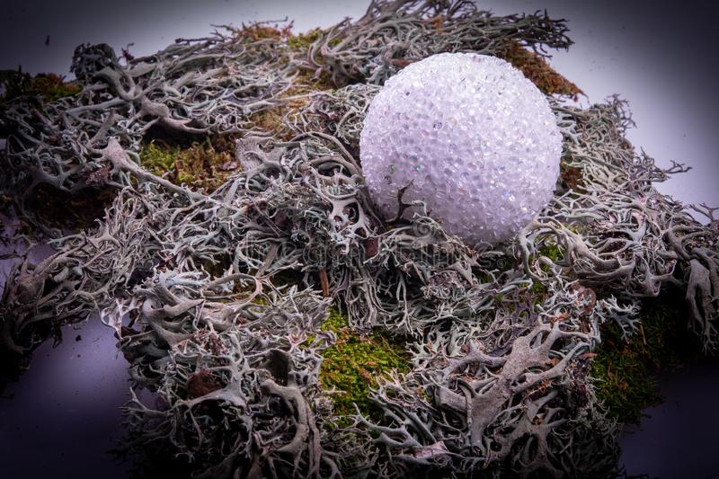 Moss green and grey plant bush with shiny ball vignette stock image