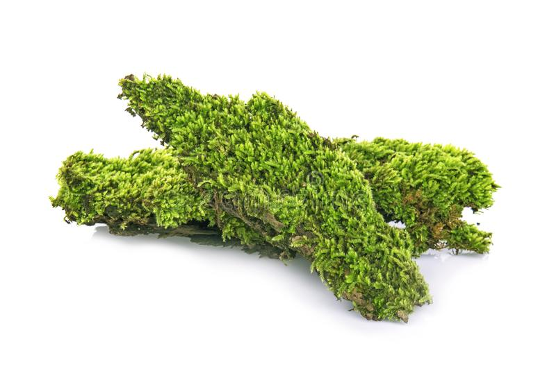 Moss, Green moss  isolated on  white background royalty free stock photography