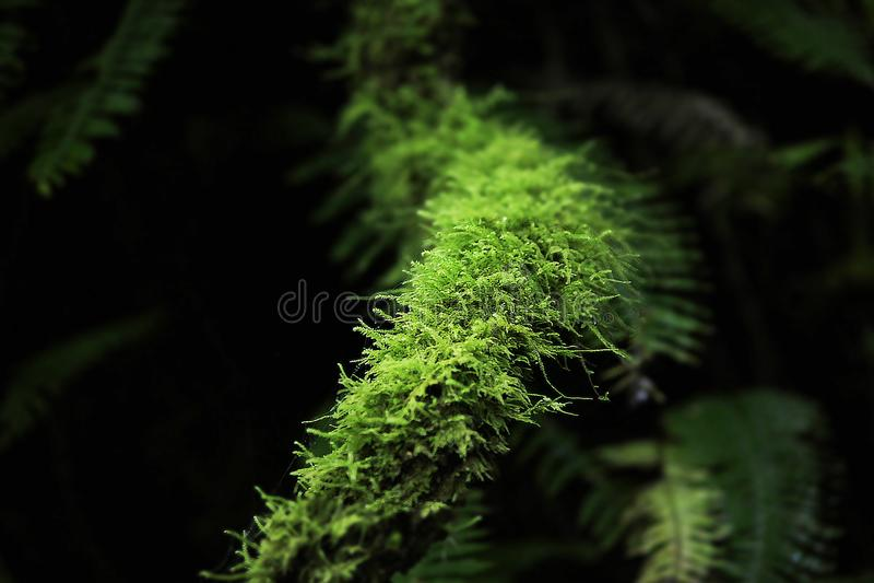 Moss Green sur une longue tige en bois images stock