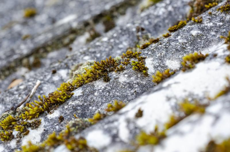 Moss on old asbestos slate royalty free stock photos