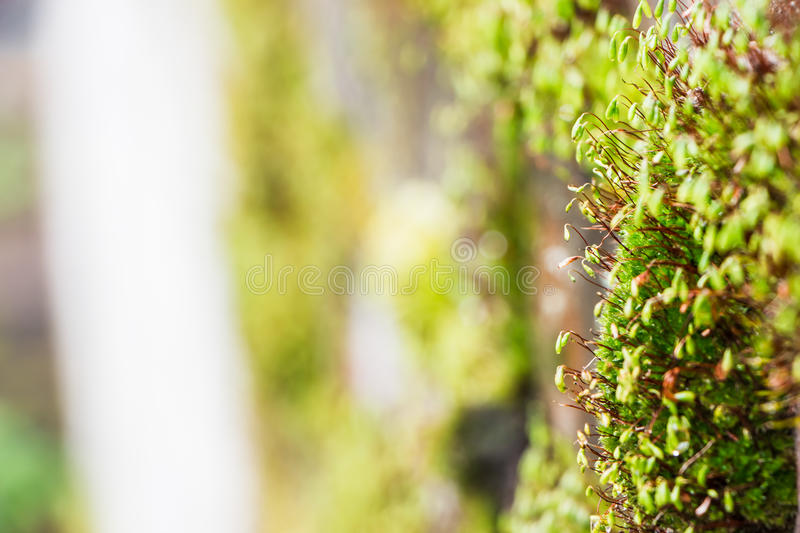 Moss growing on a brick wall stock image