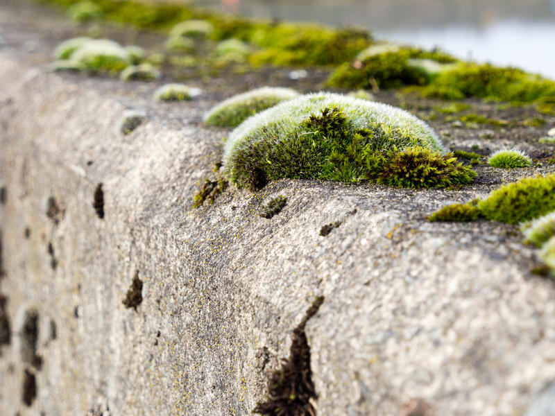 Download Moss Growing On Concrete Stock Photo - Image: 83724047