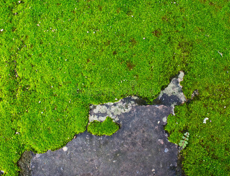 Download Moss Growing On A Concrete Wall. Royalty Free Stock Photo - Image: 34216905