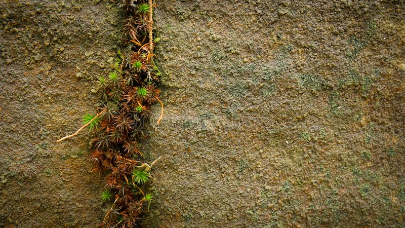 Moss growing out of cracked rock stock photos