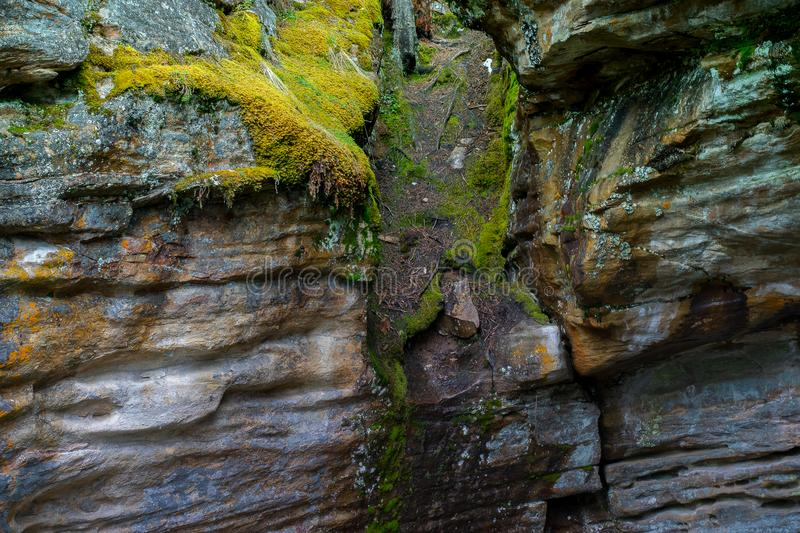 Moss growing on the side of a rocky wall. Wet rock walls with moss growing on the sides. Cracks in the rocks with yellow and green plant growth stock photo