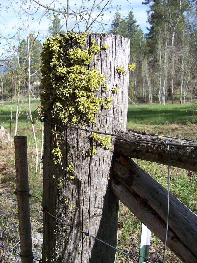 Moss Growing vert sur une vieille barrière dans les bois photographie stock