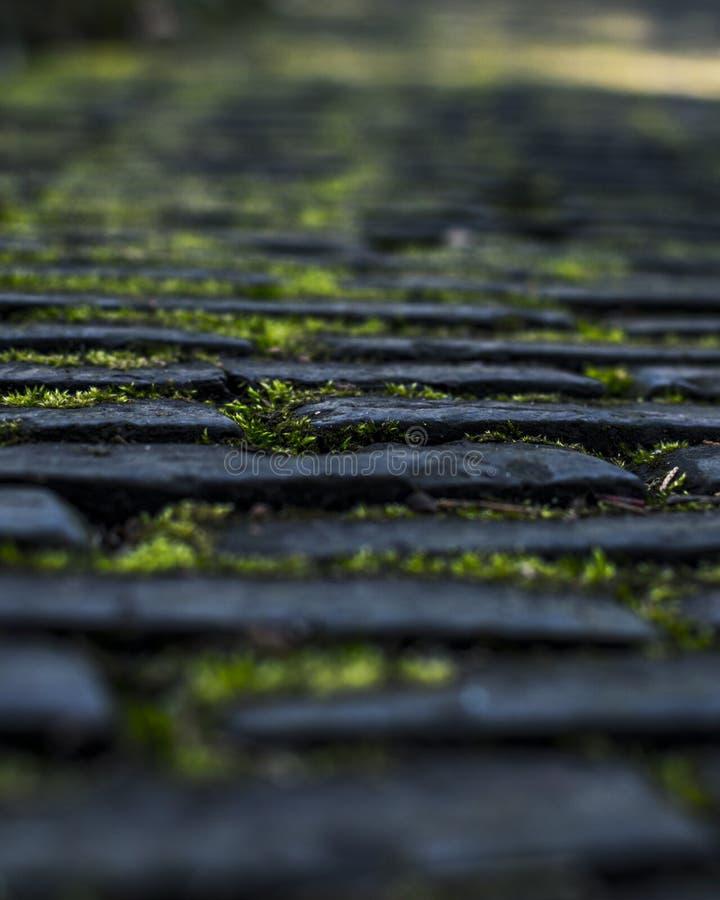 Moss Grows d'un sentier piéton image stock
