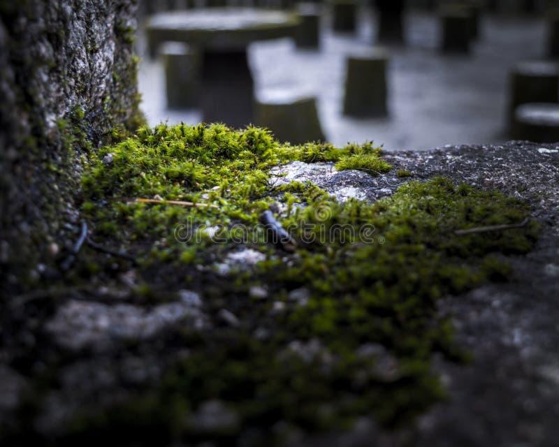 Moss Grows sur un bord en pierre images libres de droits
