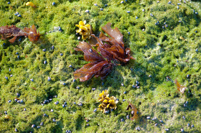 Moss and Hermit Crabs royalty free stock photos
