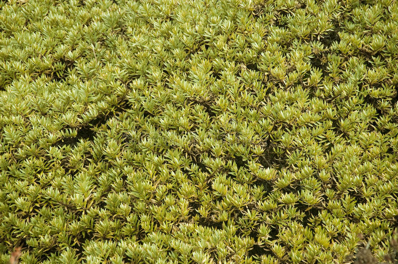 Moss in the Himalayas stock photos