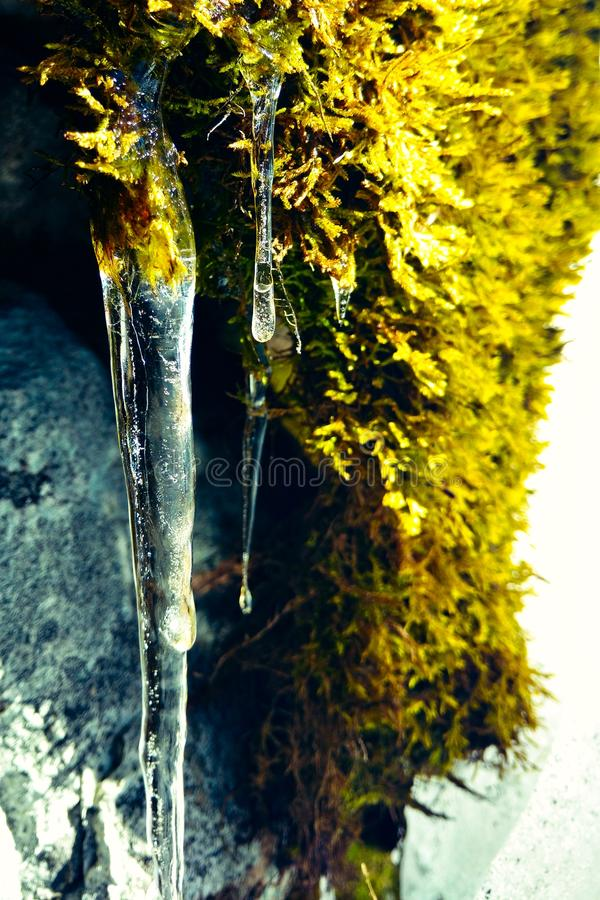 Moss Icicles images stock