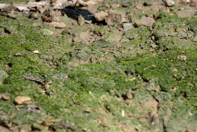 Moss Island au sol images libres de droits