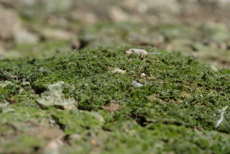 Moss Island au sol image stock