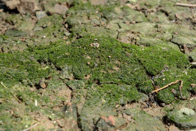 Moss Island au sol photographie stock libre de droits