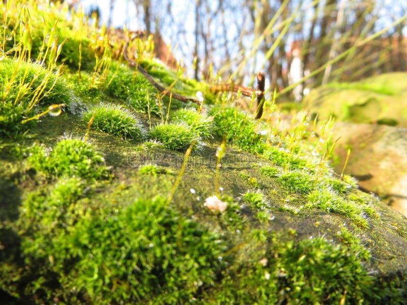 Moss Landscape fotografia stock libera da diritti
