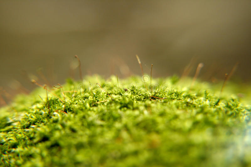 Download Moss And Lichen Stock Photo - Image: 19575310