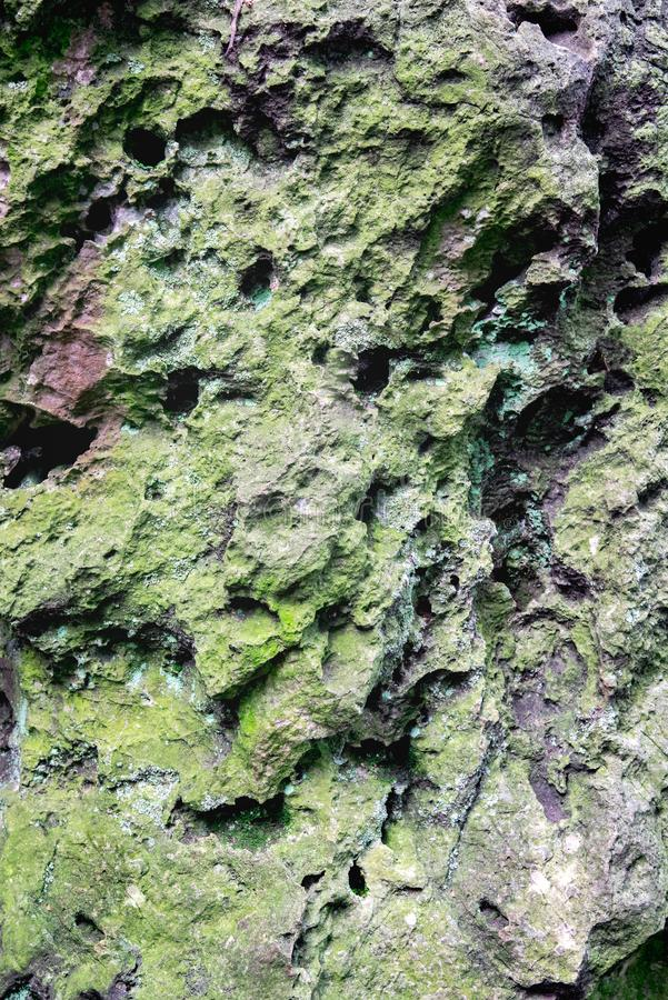 Moss and lichen growing on the karst rock. stock images