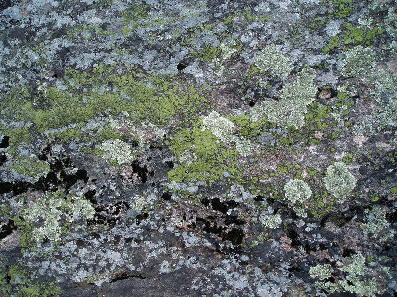 Download Moss and lichen on rock stock image. Image of stone, natural - 452979