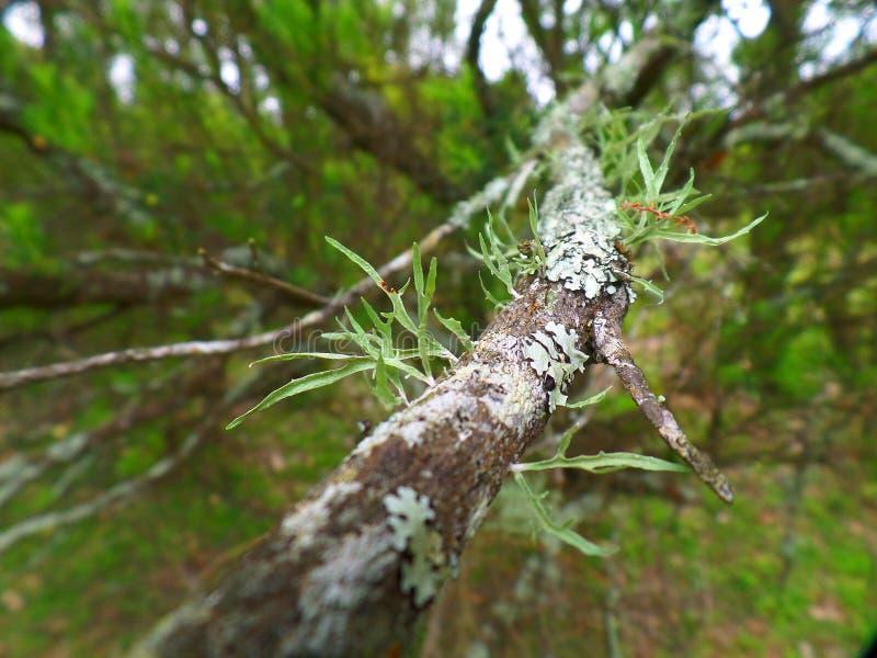 Moss And Lichen Free Public Domain Cc0 Image