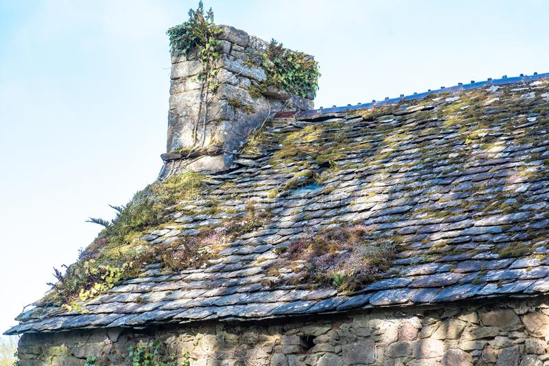 Moss and lichens on an old roof stock image