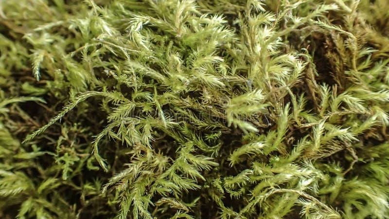 Moss Macro image stock
