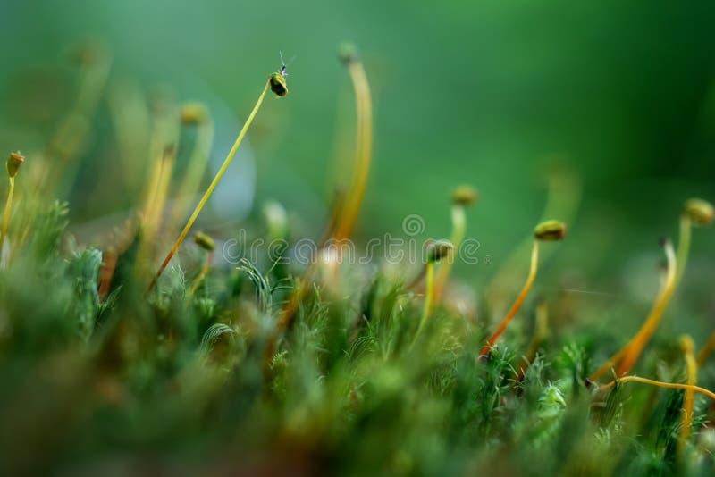 Moss macro with tiny baby grasshopper. Nature detail. stock photo