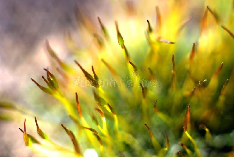 Green moss macro royalty free stock photography