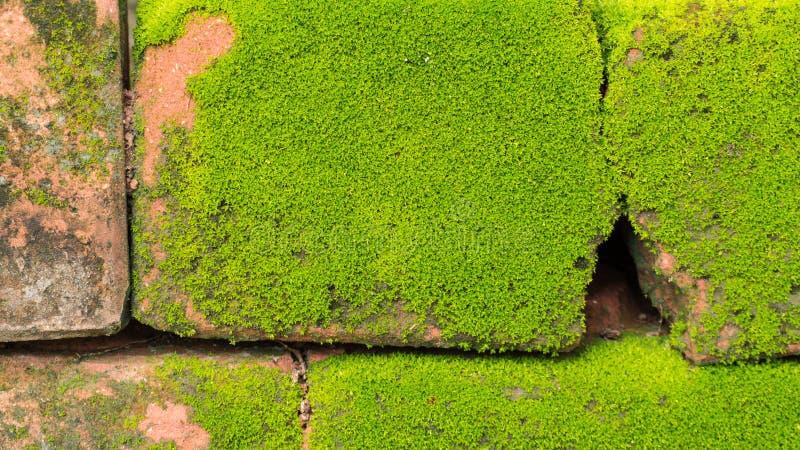 Moss Massively imagenes de archivo