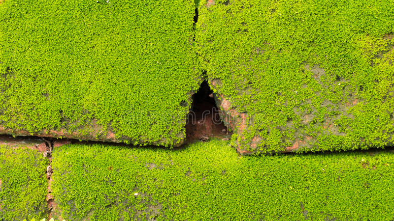 Moss Massively foto de archivo