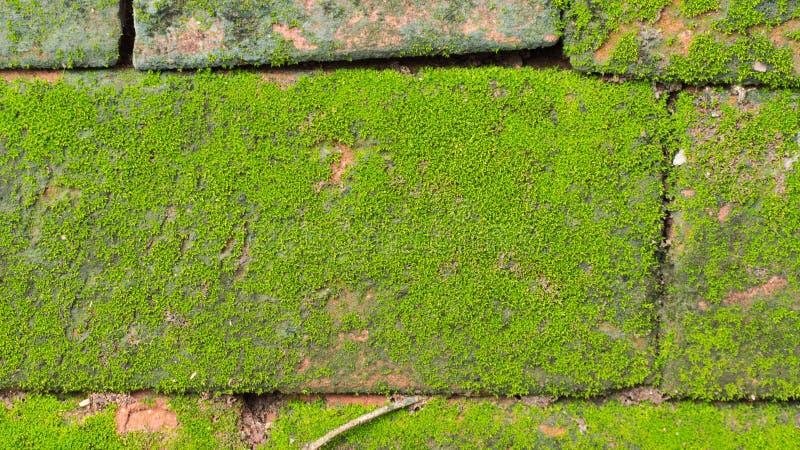 Moss Massively fotografía de archivo libre de regalías