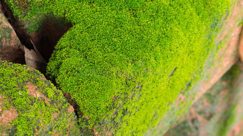 Moss Massively imagen de archivo