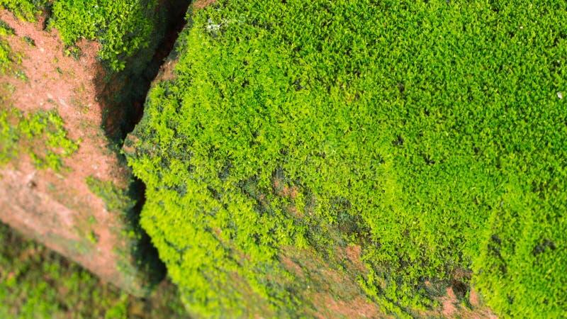 Moss Massively fotos de archivo