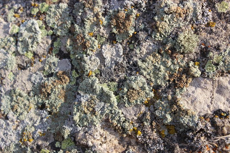 Moss and mildew covered stone in rocky area. Lambs, walk, sunset, autumn, mountain, naturel, turkey, reeds, plant, lake, shore, close-up, with, willow, tree royalty free stock photos